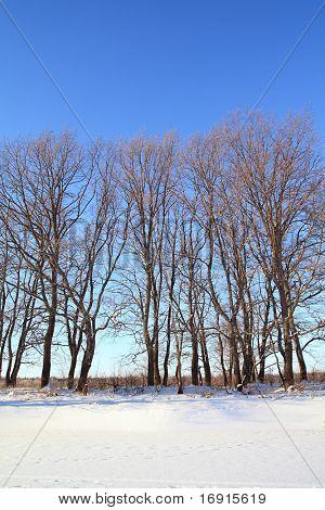oak wood on snow coast river