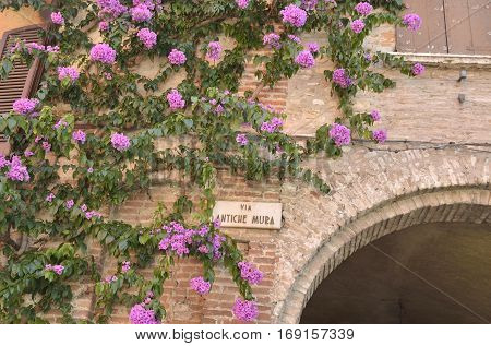 Bougainvillea over a brick arch in the village of Sirmione on lake Garda Italy.