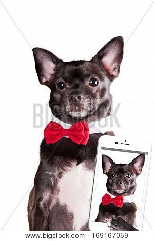 Dog with tie make selfie on white background