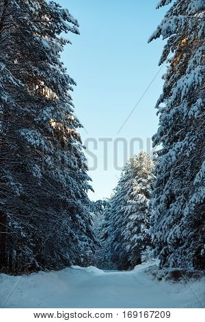 Vertical shot of fantastic winter landscape- mountain road in fir forest covered with snow