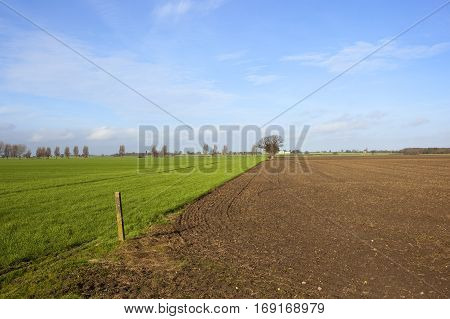 Green Wheat And Plow Soil