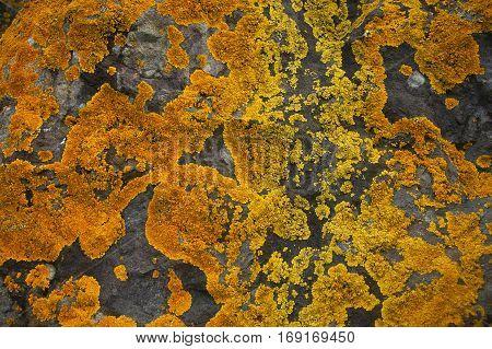 Bright yellow and orange lichen on the stone