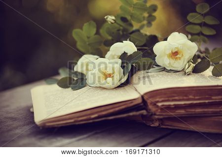 Dogrose on the open old books on a wooden table
