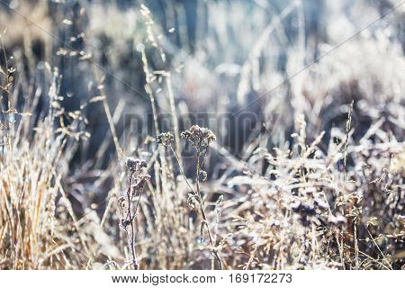 Close-up shot of the frozen grass in the winter morning in mountains.