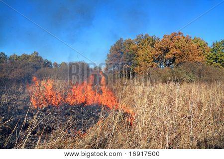 fire on autumn field