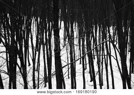 The gloomy trees in the dark forest