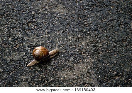 Snail crawls on the asfalt texture road.