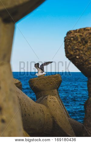 A Seagull prepares to take off from the breakwater.