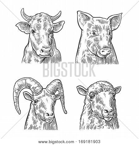 Farm animals icon set. Pig cow sheep and goat heads isolated on white background. Vector black vintage engraving illustration for menu web and label. Hand drawn in a graphic style.