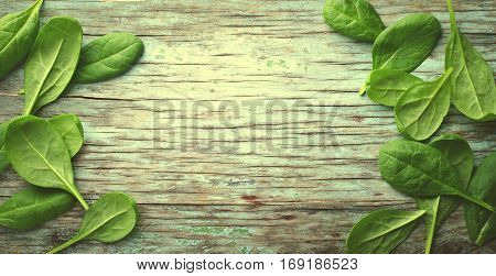 Fresh Baby spinach leaves on blue wooden background. Top view with copy space, horizontal frame, banner, toned. Healthy, Ecology concept