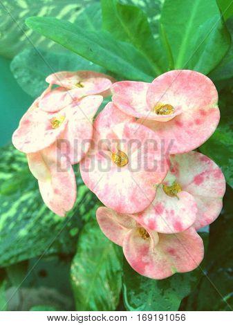 Una flor en su expresion mas intima