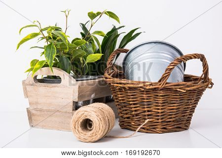 Home garden green plants in wooden box. Planting and gardening objects on white background isolated.