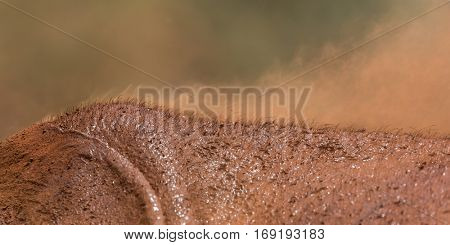 Detail of the elephant's skin after he sprayed powder on his back, african national park