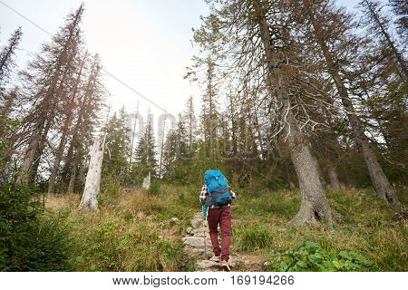 Rearview of a young man wearing a backpack and carrying trekking poles walking up a trail in the forest