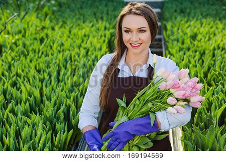 Woman gardener florist holding a bouquet of flowers standing in a greenhouse where the tulips cultivate