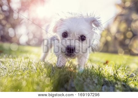 Young puppy outside walking in the park on a sunny day