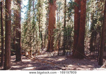 General Sherman in Sequoia National Park, California, USA
