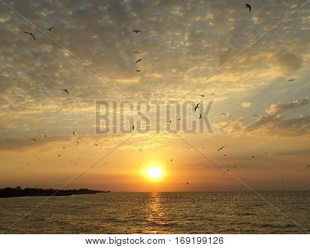 Breathtaking view of many Seagulls flying against the rising sun and golden cloudy sky on the Gulf of Thailand