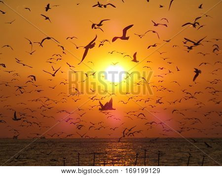 Incredible View of Uncountable Flying Seagulls Against the Golden Morning Sun over the Gulf of Thailand