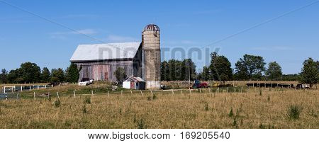 Old Farmhouse with silo tractor and cows.