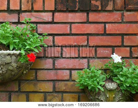 Vintage style planters with flowers and bright green leaves on terracotta bricks wall
