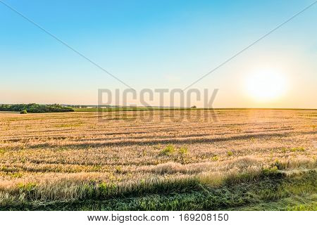 Sunny summer landscape plain in the backlit sunlight