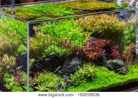 Decorative Aquarium With Plant From Glass