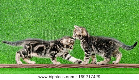 Cute little kittens playing on wooden plank on green background