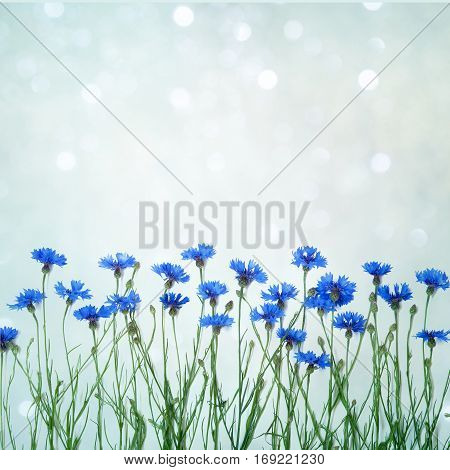Beautiful decorative floral arrangement with wild flowers cornflower on a delicate blue background. Blank Card for invitation congratulation