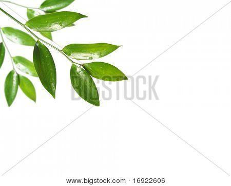 blank with green leaf