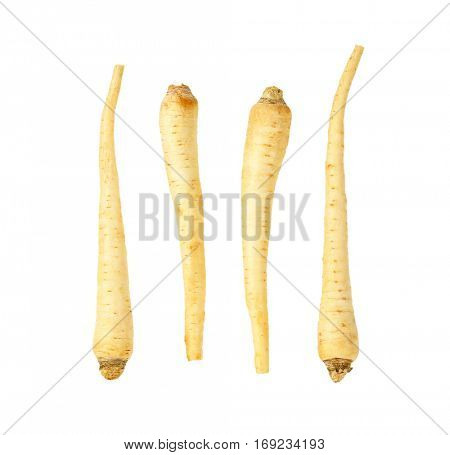 fresh parsley roots on white background