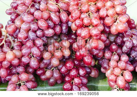 Red wine grapes background/ dark grapes blue grapes Red Grape Vitis vinifera L. VITACEAE Cardinal Grape Emperor Grape
