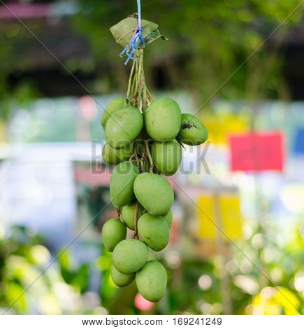 close up of fresh green mango hanging