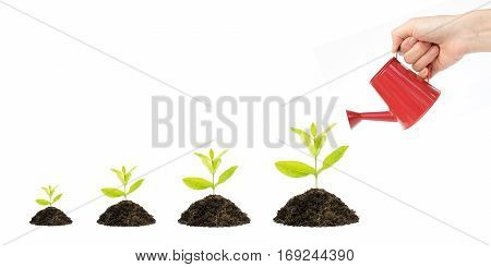Money Tree Financial Growth Flat Concept, background