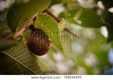 Small snail attached to the leaf of a tree
