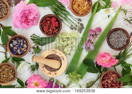 Natural alternative medicine selection with fresh and dried flowers and herbs on distressed white wood background.