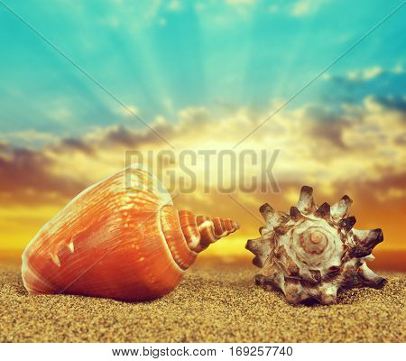 Tropical sea shells on sandy beach at sunset.