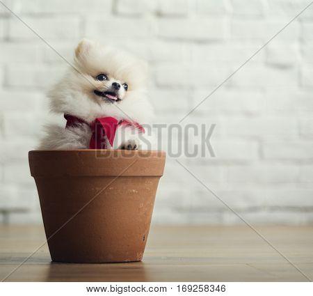 White fluffy dog inside a plant pot