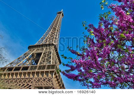Eiffel Tower In Paris France With Cherries And Blue Sky