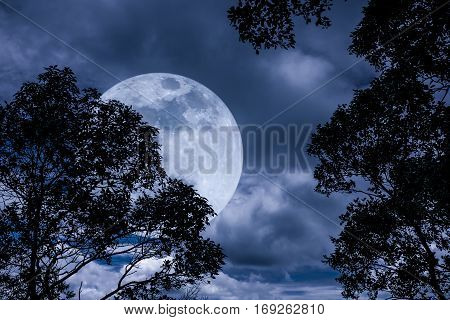 Silhouette The Branches Of Trees With Full Moon On Tranquil Nature.