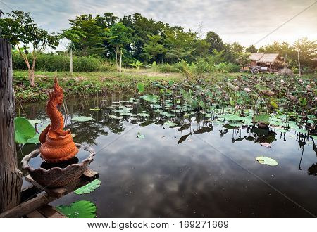 Pond With Lotus In Thailand