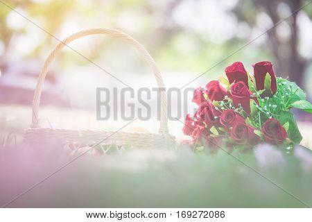 Rose Flower Valentine's Day concept in love.