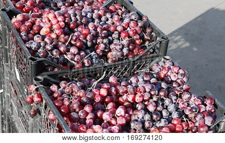 Fresh grapes in boxes on market, closeup