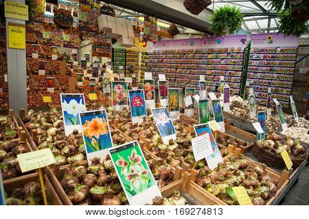 Tulip bulbs to be sold at the flower market in Amsterdam, Holland