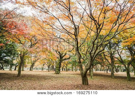 tree leaves in the park change color in autumn