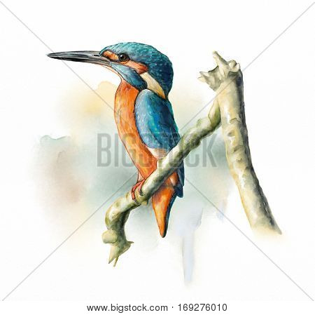 Wetland birds, King Fisher. Original watercolor.