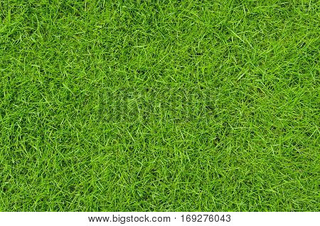Background of green grass front yard, green grass background.