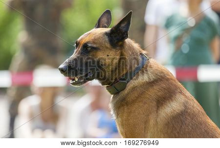 german military police dog shows to his owner