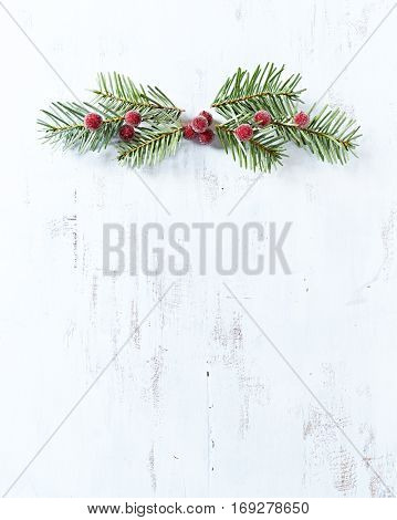 Christmas background with natural spruce