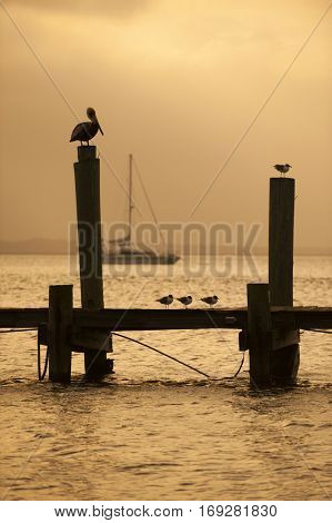 warm sunset silhouetted background harbor dock scene with boat and birds